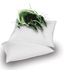 Control dust mites and other allergens in your home