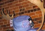 The Annual Easter Bonnet Contest #3