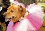14th annual Pride of Pets pageant #38