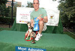 PETS-DC's Pride of Pets Dog Show #15