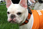 PETS-DC's Pride of Pets Dog Show #44