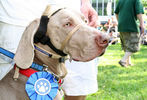 PETS-DC's Pride of Pets Dog Show #83