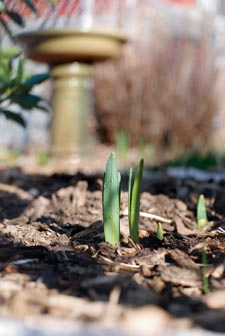 2008-03-06_gardening_3289_3981