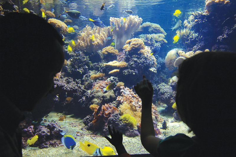 National Aquarium Baltimore Courtesy Visit Baltimore