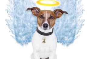 Angel dog By Javier Brosch
