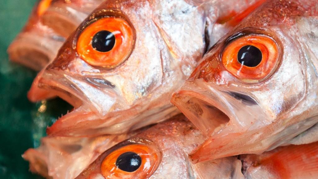 Fish_for_sale_at_Tsukiji_Fishmarket,_Tokyo-30 (2)