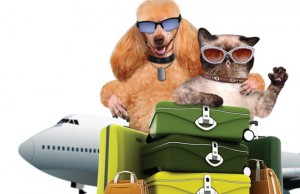 Jet Pet Photo illustration by Rasulov