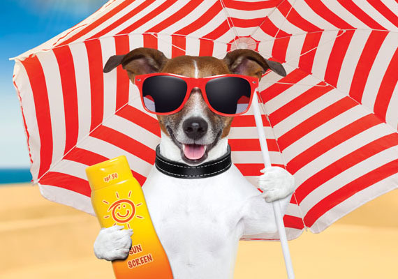 dog-on-beach-umbrella