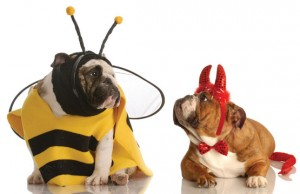 Halloween dogs Photo by WilleeCole Photography