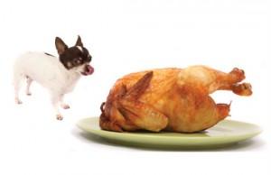 Dog with Turkey