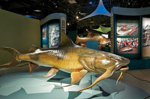 science hogan monster fish exhibition