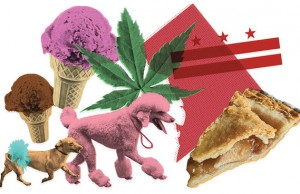 Map of DC, dog show, ice cream, pie, marijuana leaf