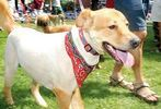 Pets-DC's 13th Annual Pride of Pets Dog Show #38