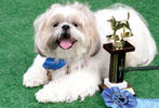 PETS-DC's Pride of Pets Dog Show #11