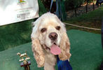 PETS-DC's Pride of Pets Dog Show #13