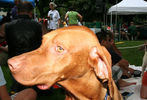 PETS-DC's Pride of Pets Dog Show #25