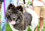 PETS-DC's Pride of Pets Dog Show #41