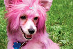 PETS-DC's Pride of Pets Dog Show #60