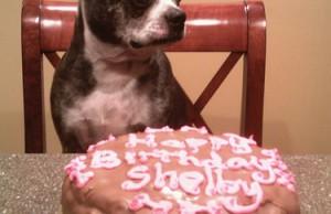 Photo of dog with birthday cake