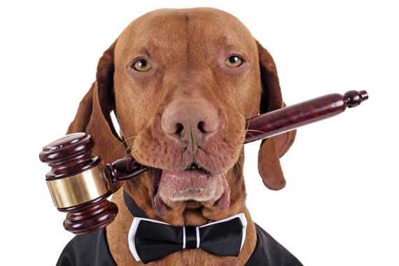 Photo of dog with gavel in mouth