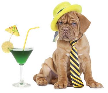 shutterstock_191997365-dog-with-cocktail-by-Kuznetsov-Alexey