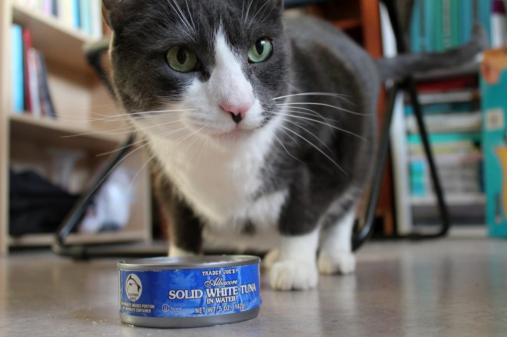 Cat Tuna