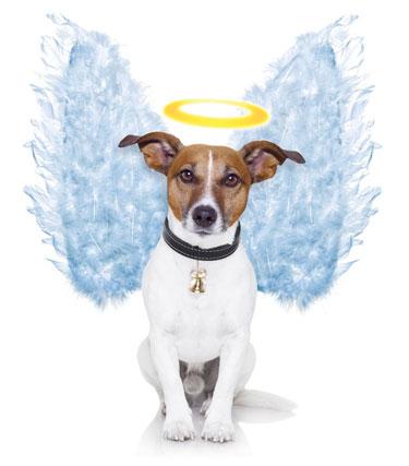 Angel dog By Javier Brosch