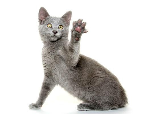 Cat photo by Tony Campbell