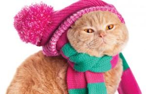Winter cat. Photo by vvvita