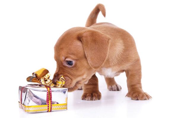 Holiday puppy Photo by Liliya Kulianionak