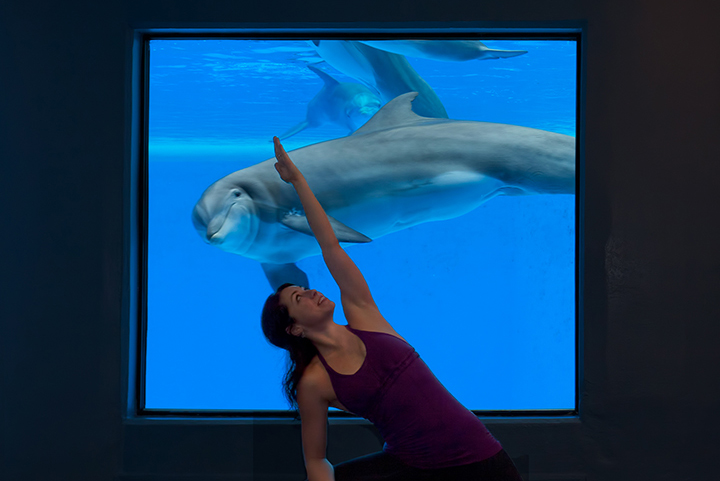 The-Mirage---Yoga-Among-the-Dolphins