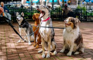 city dogs, daycare, dc, rescue, election day