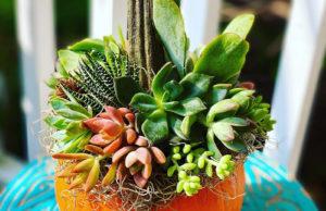 Indigro Plant Design