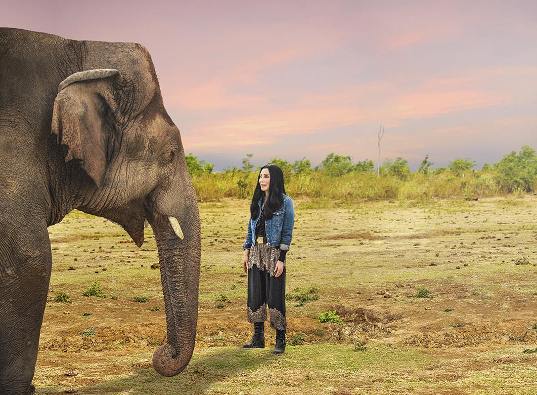 cher, elephant, rescue
