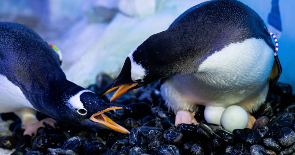 gay, penguins