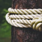tree, tied, rope